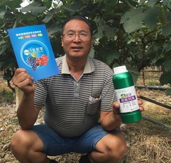 北农华安洗产品防治葡萄霜霉病效果非常好
