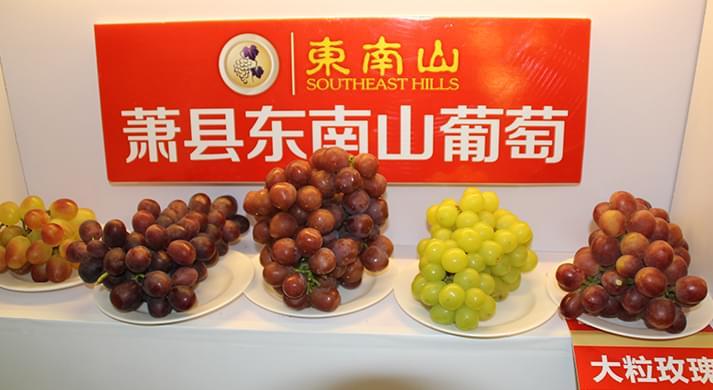 东南山葡萄庄园