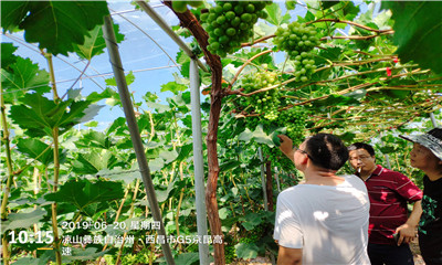 北农华:葡萄健康栽培与植保我们一直在路上