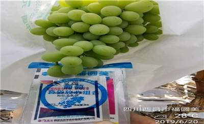 葡萄转色期出现葡萄酸腐病,我要怎么防?