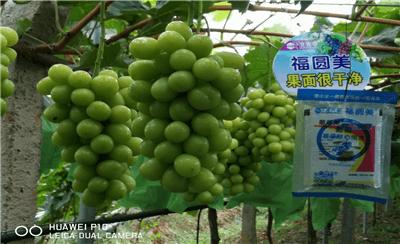 北农华为您揭晓,葡萄种植户为何在雨中相聚