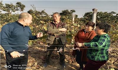 葡萄冬剪可不要盲目,葡萄健康栽培联盟教你冬剪该注意哪几项