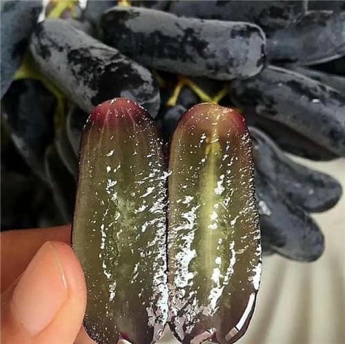 蓝宝石葡萄种植要求有哪些?北农华给您一一道来